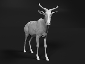 Tora Hartebeest 1:76 Standing Male in Smooth Fine Detail Plastic