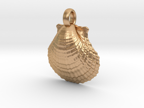 Scallop Shell in Natural Bronze