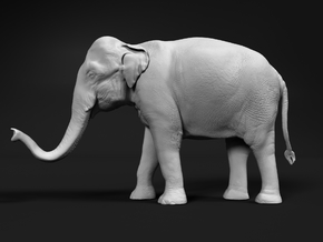 Indian Elephant 1:25 Standing Female 2 in White Natural Versatile Plastic