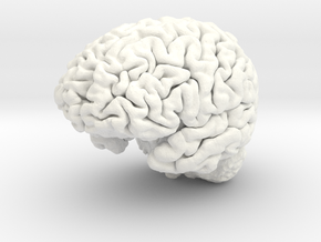 Human Brain Model (Small) in White Processed Versatile Plastic