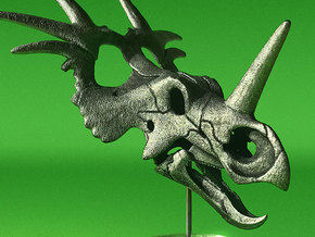 Styracosaurus - dinosaur skull model in White Natural Versatile Plastic: 1:12