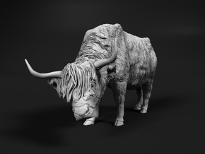 Highland Cattle 1:45 Female with the head down in Smooth Fine Detail Plastic