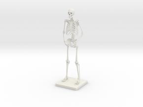 """10"""" Desktop Skeleton in White Natural Versatile Plastic"""