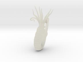 Heteroceras in Transparent Acrylic
