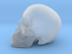 Detailed Human Skull (Life sized) in Smooth Fine Detail Plastic