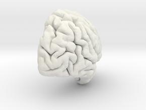 Right Brain Hemisphere 1/1 in White Natural Versatile Plastic