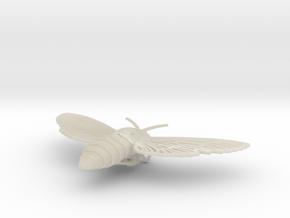Death's-head Hawkmoth in White Acrylic