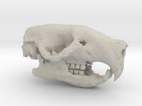 Rat Skull in Natural Sandstone