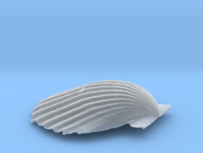 Scallop Shell in Smooth Fine Detail Plastic