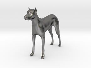 Dog 22 in Polished Nickel Steel
