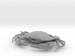 Female Blue Crab in Metallic Plastic