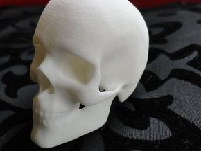 Human Skull in White Natural Versatile Plastic