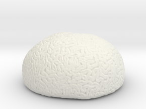 Brain Coral in White Natural Versatile Plastic