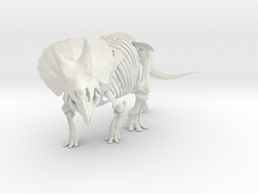 Triceratops horridus skeleton 1:40 scale in White Strong & Flexible