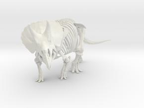 Triceratops horridus skeleton 1:48 scale in White Natural Versatile Plastic