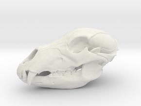 Bear Skull. 5cm in White Natural Versatile Plastic: Large