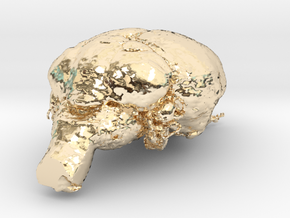 Get a pet mouse brain, real size!  Take it HOME  in 14K Yellow Gold