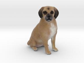 Custom Dog Figurine - Cassidy in Full Color Sandstone