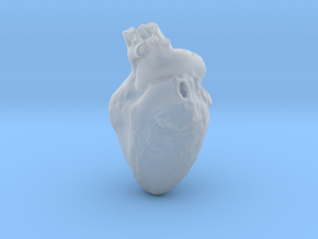 Real Anatomical Heart Hollow in Smooth Fine Detail Plastic