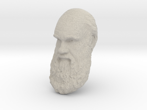 "Charles Darwin 12"" Head Wall Mount in Natural Sandstone"