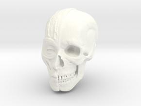 Anatomy Head in White Processed Versatile Plastic