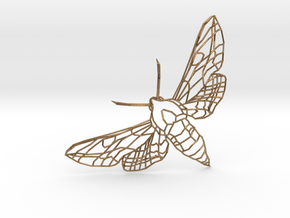The Spurge Hawk-moth  in Natural Brass