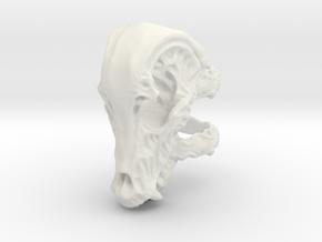 Beastskull_S in White Natural Versatile Plastic