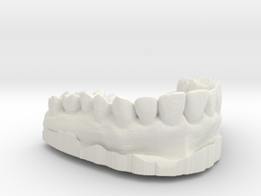 Anatomical Lower Teeth in White Natural Versatile Plastic