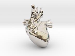 Anatomical Heart Hanger Pendant in Rhodium Plated Brass