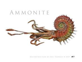 Ammonite 8cm in Smooth Fine Detail Plastic