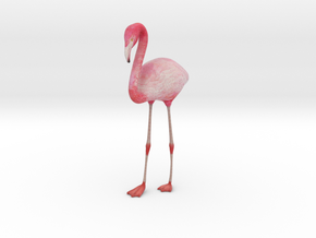 Flamingo in Full Color Sandstone