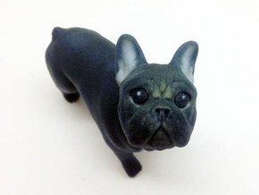 Looking Up Black Frenchie in Full Color Sandstone