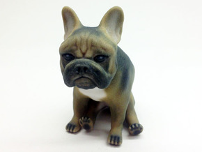 Sitting Deviled Eye Brown Frenchie  in Full Color Sandstone