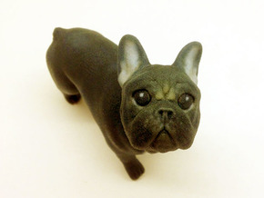 Looking Up Brown Frenchie  in Full Color Sandstone