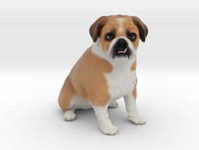 Custom Dog Figurine - Gomez in Full Color Sandstone