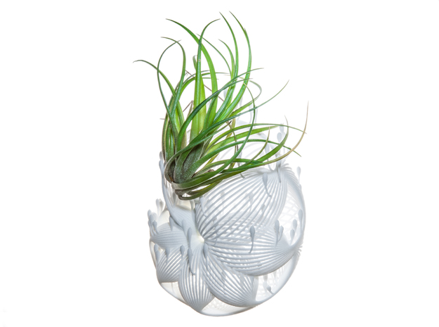 Bulbophyllum Plurispora Planter in White Natural Versatile Plastic