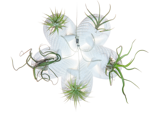 Bulbophyllum Astrum Planter in White Strong & Flexible