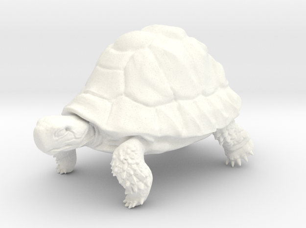 Tortoise in White Strong & Flexible Polished