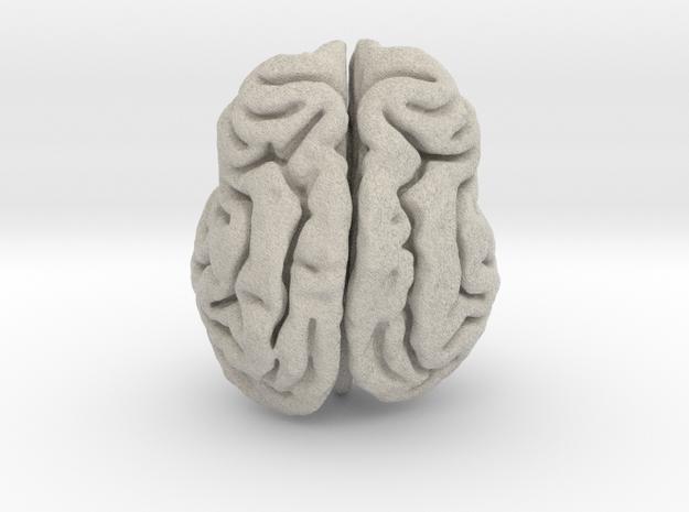 Leopard brain