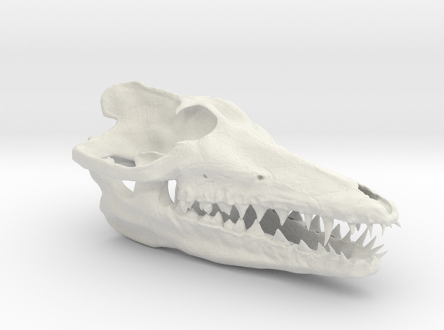 Pakicetus skull in White Strong & Flexible