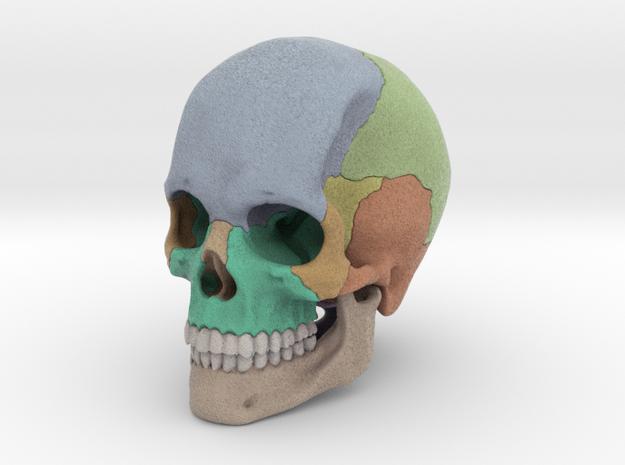 Artist Sculpted Skull For Reference in Full Color Sandstone