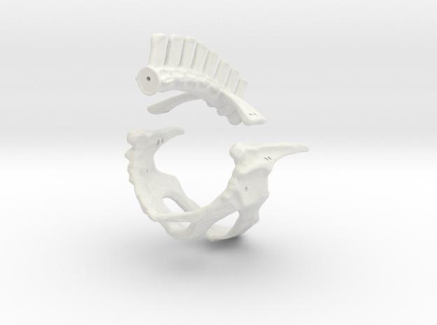 Komodo Hip Skeleton 1:5 Scale