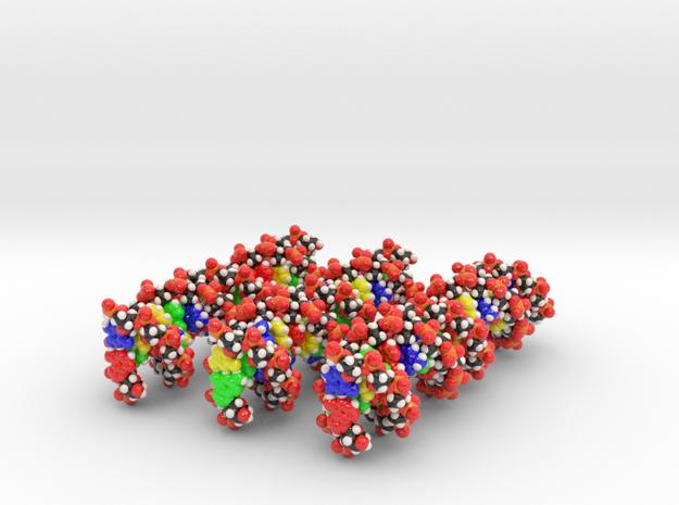 RockEdu Science Saturday DNA Model Set in Glossy Full Color Sandstone