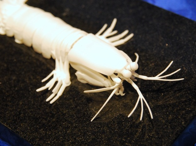 Articulated Mantis Shrimp (O. scyllarus) 3d printed