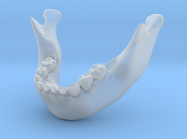 Subject 6b | Mandible + Teeth in Smooth Fine Detail Plastic