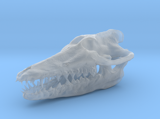 2cm. pakicetus skull in Smooth Fine Detail Plastic