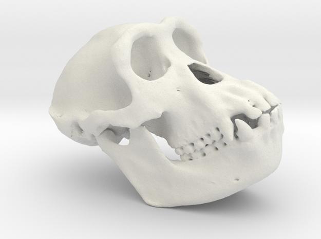 Chimpanzee skull 52mm 3d printed