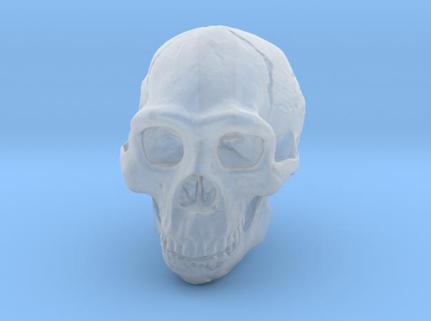 Lanyard : Real Skull (Homo erectus) in Smooth Fine Detail Plastic