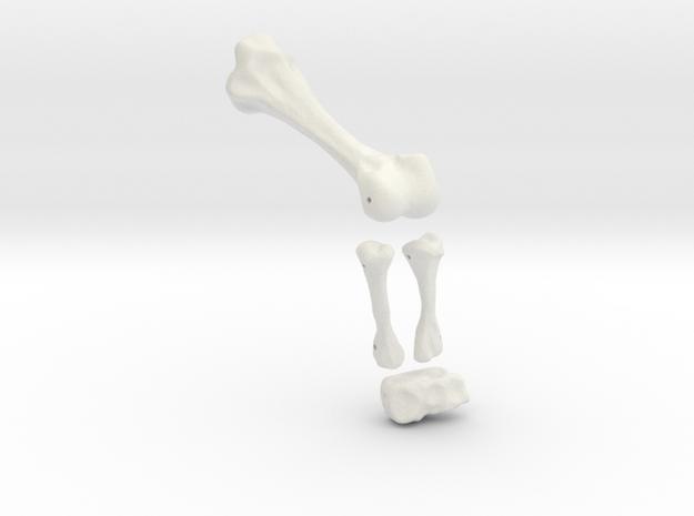 Komodo Left Leg Back 1:5 Scale