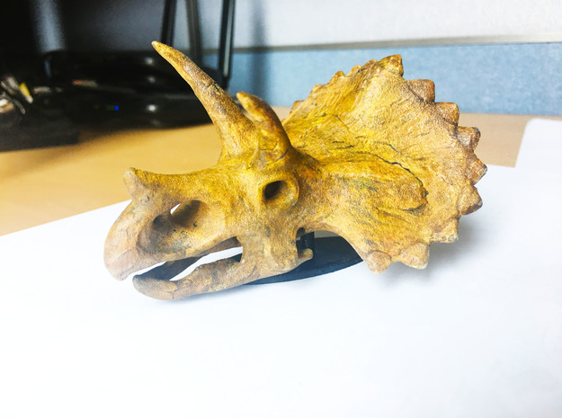 Triceratops Skull in White Natural Versatile Plastic: Small